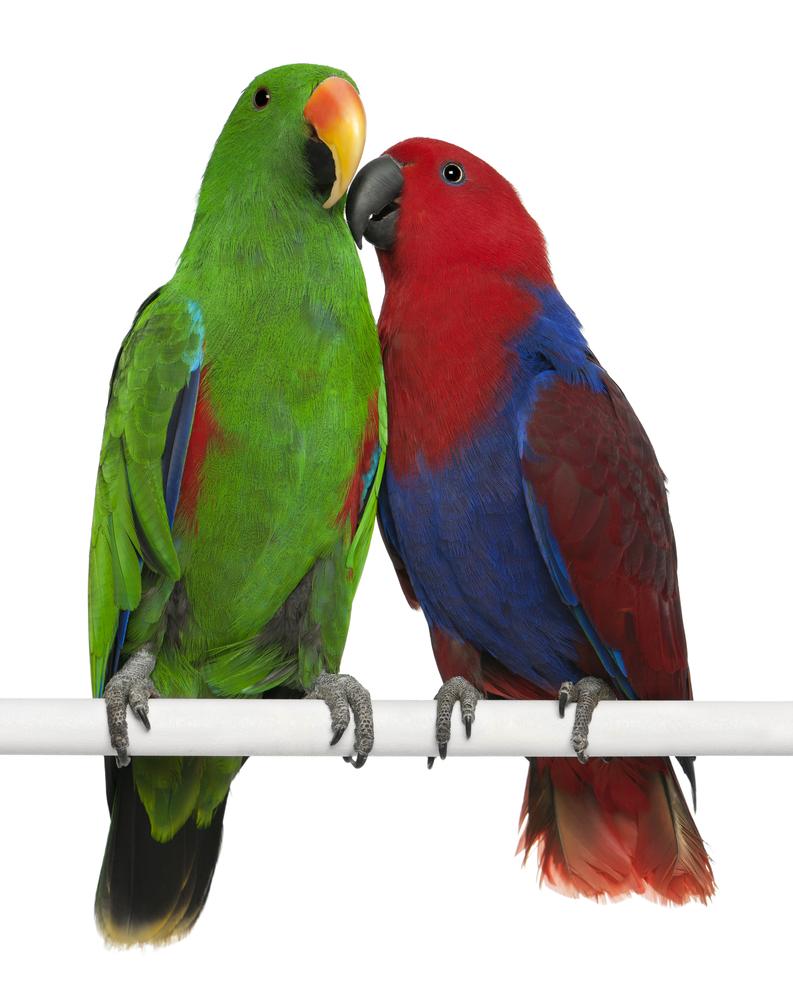 edel-papegaaien