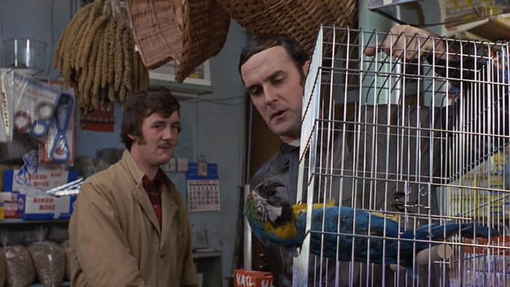 tamme papegaai kopen